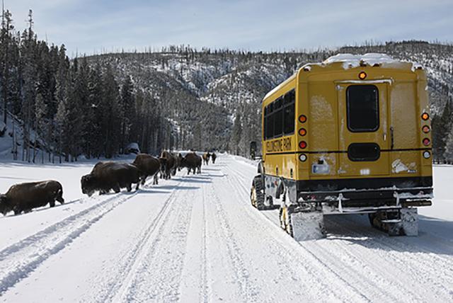 Yellowstone podrozewww