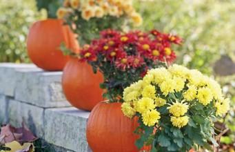 jesienny ogrod