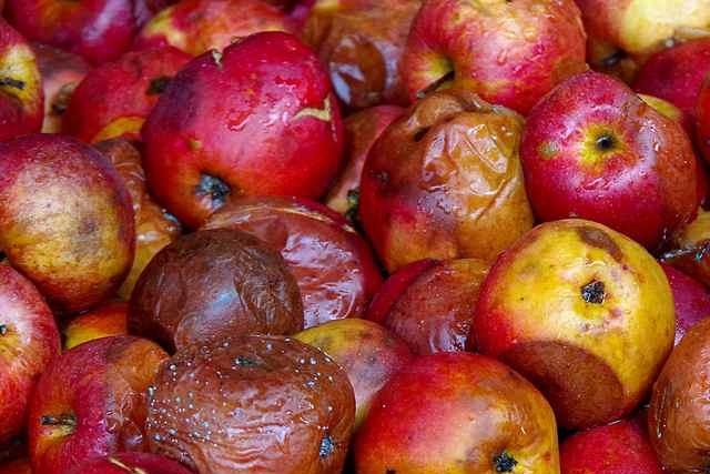 zgnile-owoce