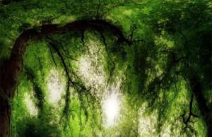 w magicznym lesie zd www